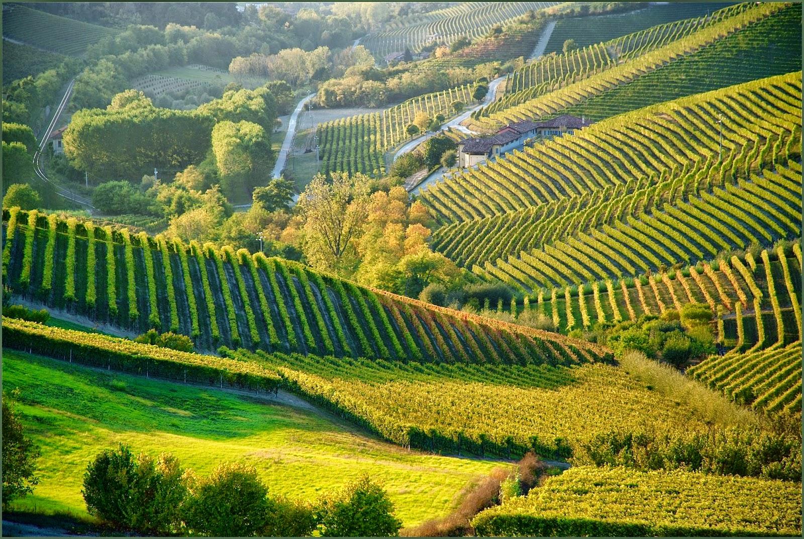 piemonte_wine_rnd