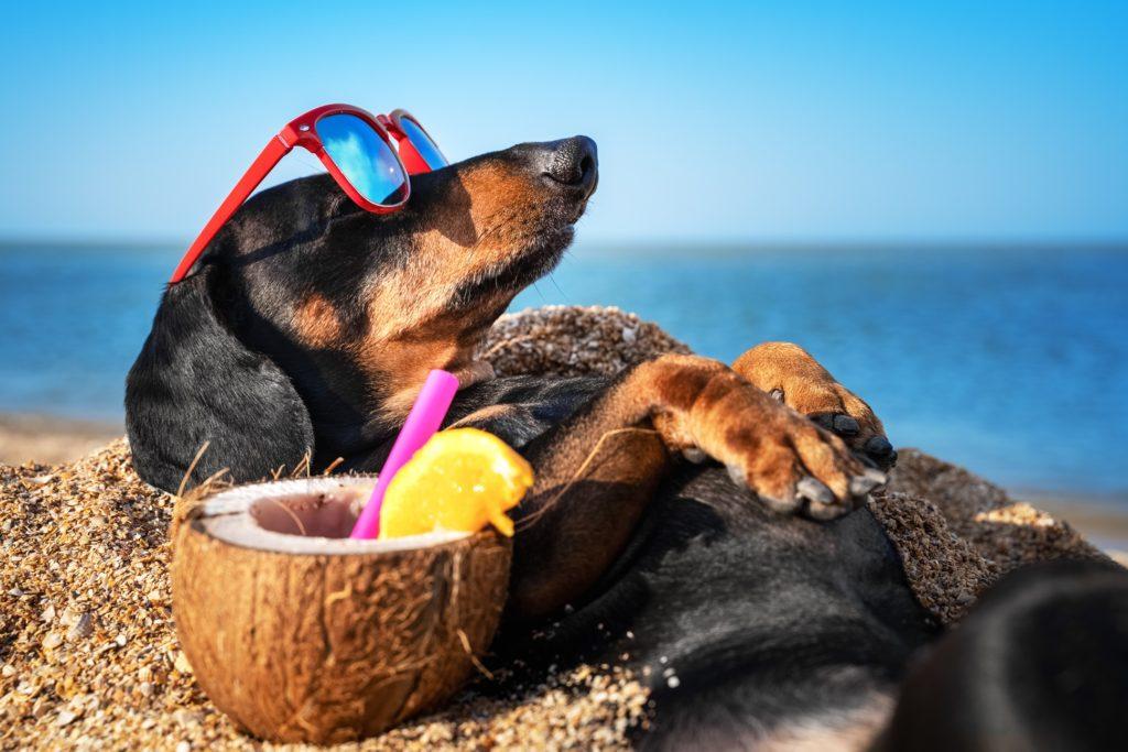 Italian Residence. Vakantie italie strand hond