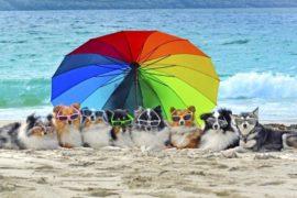 Vakantie met de hond Italian Residence