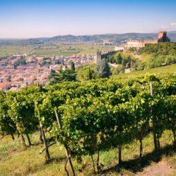 italie, veneto, wijngaarden